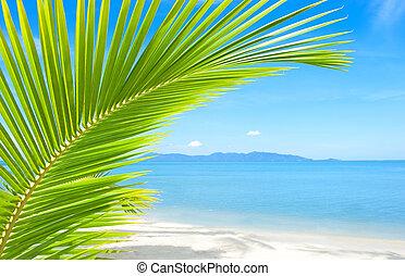 gyönyörű, fa, tropikus, homok, pálma tengerpart