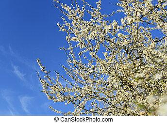 gyönyörű, fa, virágzó