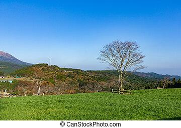 gyönyörű, farmland