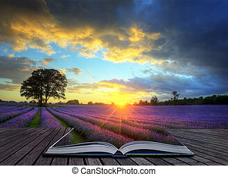 gyönyörű, fogalom, atmoszférikus, érett, vibráló, vidéki táj, megfog, kép, ég, levendula, kreatív, nyomasztó, napnyugta, angol, elhomályosul, felett, táj
