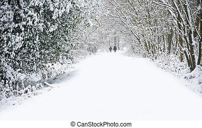 gyönyörű, gyalogló, tél, család, hó, mély, színhely, szűz, erdő, sétány, út, kutyák