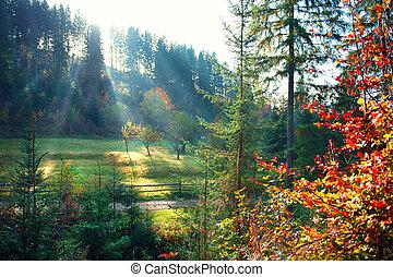 gyönyörű, ködös, öreg, kaszáló, természet, reggel, scene., ősz erdő