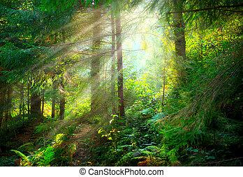 gyönyörű, ködös, küllők, öreg, nap, színhely, erdő
