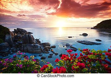 gyönyörű, koh samui, dicsőség, erőforrás, reggel, békés, tengerpart