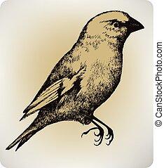 gyönyörű, madár, rajz, illustration..eps, kéz, vektor