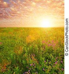 gyönyörű, mező, felett, virág, ég