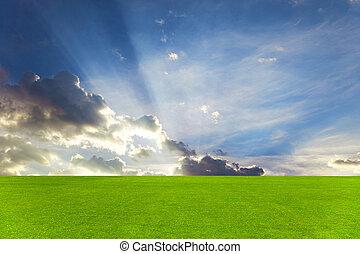 gyönyörű, mező, zöld ég