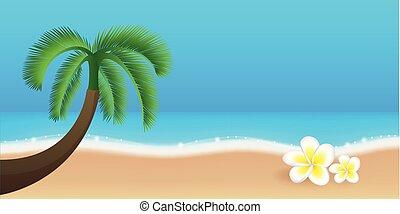 gyönyörű, nyár, menstruáció, frangipani, fa, tropikus, pálma, tervezés, ünnep, tengerpart