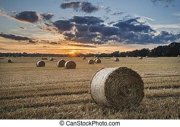 gyönyörű, nyár, színes, széna, vidéki táj, kép, mező, napnyugta, közben, bajok, táj