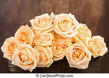 gyönyörű, rózsa