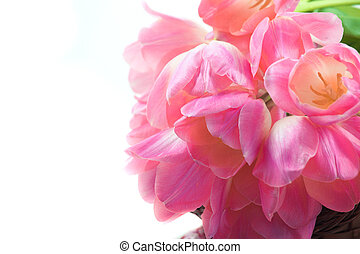 gyönyörű, rózsaszínű, tulipánok