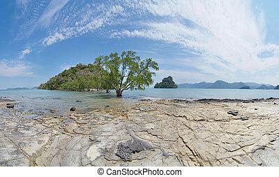 gyönyörű, táj, bitófák, sziget, kicsi, gyertyafa
