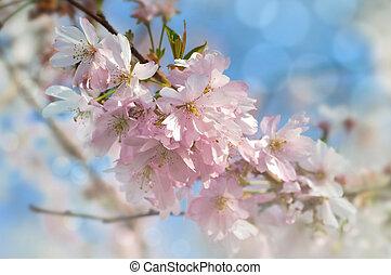 gyönyörű, tavasz, virágzó