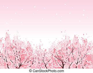 gyönyörű, tele, kivirul, cseresznye fa, virág