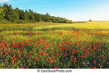 gyönyörű, visszaugrik virág, field., landscapes.
