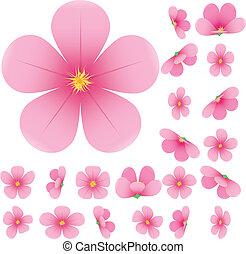 gyűjtés, menstruáció, állhatatos, ábra, vektor, cseresznye, rózsaszínű, kivirul, sakura