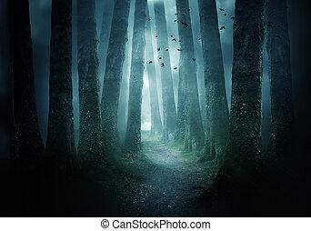 gyalogjáró, erdő, sötét, át