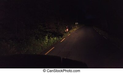 gyalogló, éjszaka, őz, erdő, út