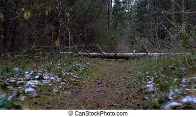 gyalogló, bukott, erdő, bitófák