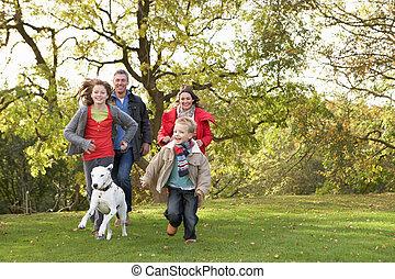 gyalogló, család, liget, fiatal, kutya, át, szabadban