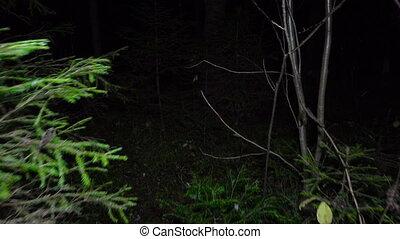 gyalogló, erdő, éjszaka