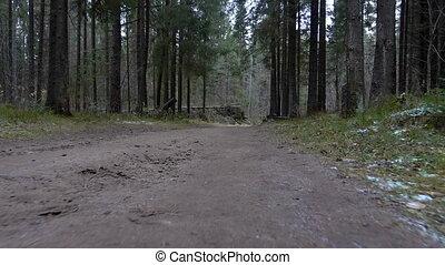 gyalogló, erdő, út