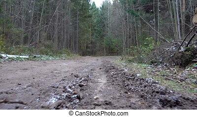 gyalogló, gyalogjáró, erdő