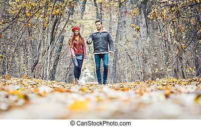 gyalogló, színes, párosít, kutya, fiatal, ősz, -eik, erdő
