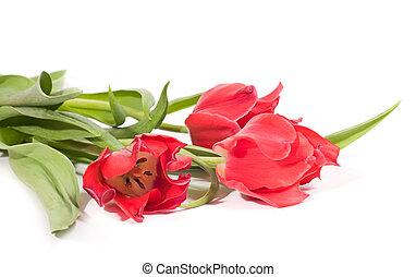 háttér, elszigetelt, tulipánok, rózsaszínű, gyönyörű, fehér