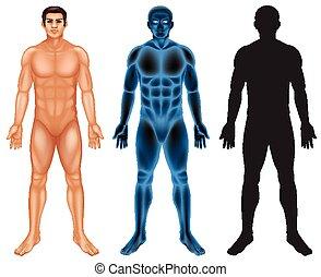 háttér, emberi, fehér, test
