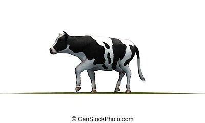 háttér, fehér, -, elszigetelt, tehén