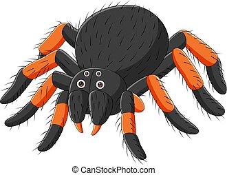 háttér, fehér, pók, tarantellapók, karikatúra