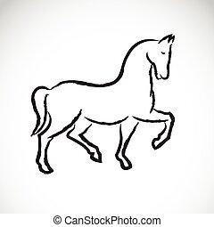háttér., ló, vektor, fehér