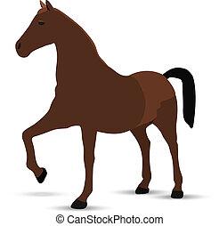 háttér, portré, white ló, álló, ellen
