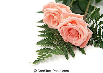 háttér, rózsaszínű rózsa