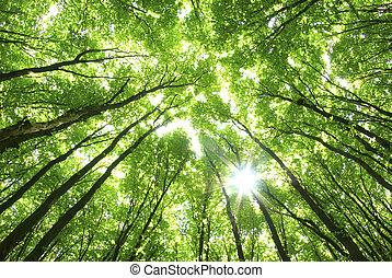 háttér, zöld fa