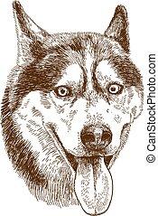 héjas, rajz, metszés, kutya, ábra, fej