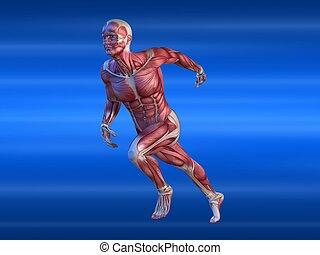 hím, sprinter