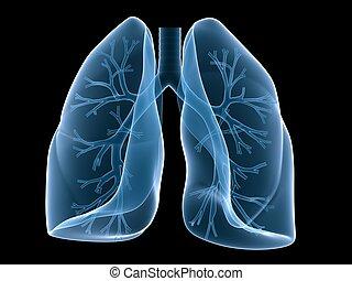 hörgő, tüdő