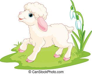 húsvét, bárány