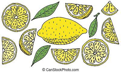 húzott, ábra, elements., kéz, isolated., citrom, vektor, citrom, állhatatos, gyümölcs, szelet, tervezés, quarter., sárga
