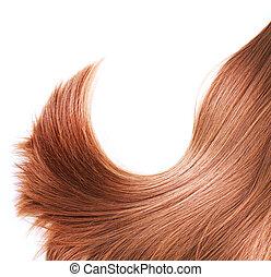 haj, elszigetelt, barna, egészséges, fehér
