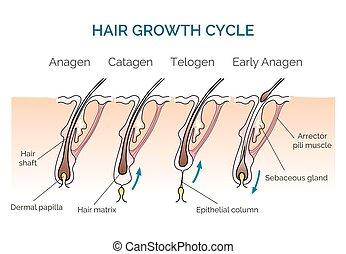haj, növekedés, biciklizik