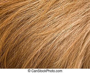 haj, szőke
