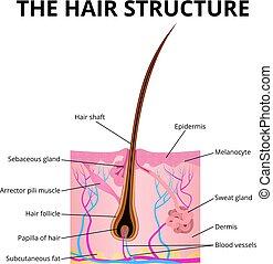 haj, szerkezet