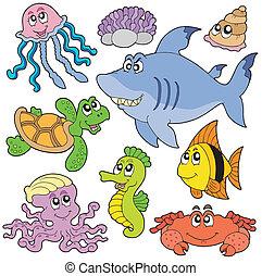 halfajták, 2, állatok, tenger, gyűjtés