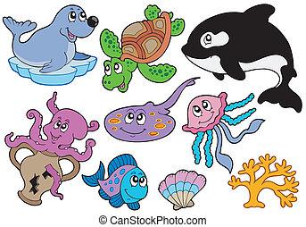 halfajták, tengeri állat, gyűjtés