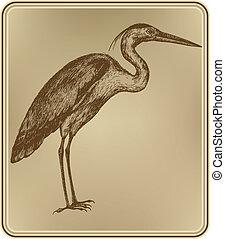 hand-drawing., madár, vektor, illustration., kócsag