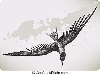 hand-drawing., madár, vektor, illustration., repülés