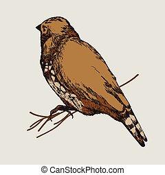 hand-drawing., madár, vektor, illustration.